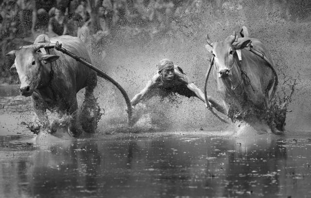raid bull surf